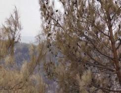 لبنان اليوم - المزارعون اللبنانيون يستعدون لجني محصول الزيتون وأزمة المحروقات تُهدّد الموسم